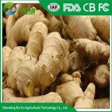 La Chine de gingembre frais les fournisseurs de haute qualité