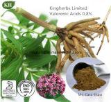 Extracto de raíz de Valeriana Ácidos Valerénicos 0,2%, 0,5%, 0,8% por UV; 4: 1, 10: 1