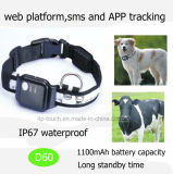 IP67 Rastreador GPS Pet impermeável com tempo de espera (D60)