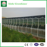 Serres chaudes en verre d'envergure multi d'agriculture pour le légume/jardin