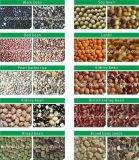 Classificador da cor dos feijões da cor cheia