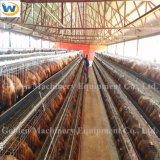 Клетка батареи цыпленка цыплятины горячей цены по прейскуранту завода-изготовителя сбывания автоматическая для слоев