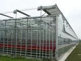 Serra di vetro di alta qualità di basso costo per uso agricoltura/dell'annuncio pubblicitario