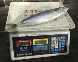 Bevroren Vreedzame Makreel zonder Hoofd en Staart