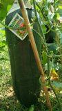 葉状に野菜に植わることのUnigrowのバチルスLaterosporus