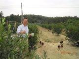 Aditivo da alimentação de Unigrow para a criação de animais dos rebanhos animais