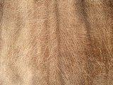 Tessuto della pelle scamosciata di Microfiber del tessuto del sofà del poliestere (K030)