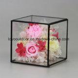 La talla grande preservada de las rosas de la buena calidad en vidrio preservó las flores frescas