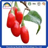 Alimentos saudáveis Goji Wolfberry Fruit Extract