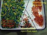 Plastique de Vsee RVB réutilisant la trieuse en plastique de couleur écrasée par couleur de machine
