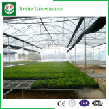 Qingzhou Single-Span film PE Sysytem Grfeenhouse avec ventilation