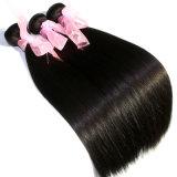 8A品質の100%年の毛の拡張ビルマのバージンの人間の毛髪