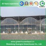 Serre chaude solaire de film plastique pour la plantation de tomate et de concombre