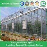 رخيصة [فنلو] نوع زجاجيّة دفيئة لأنّ خضرة وزهرات ينمو