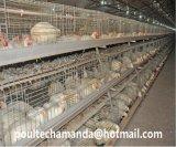 養鶏場の肉焼き器の家禽はおりに入れる装置(タイプフレーム)を