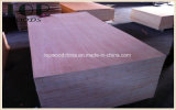 contre-plaqué commercial BB/CC de 18*1220*2440mm pour des matériaux de construction