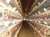 El chino de bajo costo y estructura de acero de la luz de alta calidad de la casa de aves de corral pollo/ derramada (XGZ-TX-0302)