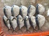 中国の工場Moonfishの価格