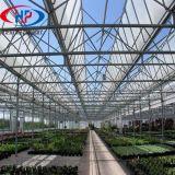 Heißes BAD galvanisiertes Rahmen-Glasgewächshaus für Blumen-wachsendes