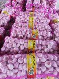 sacchetto della maglia 7kg che imballa aglio bianco normale rosso fresco