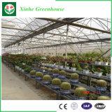 Serre chaude complète assemblée par Greenhouseeasily de polycarbonate, jardin agricole de serre chaude