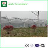 Парник пленки PVC/PE/Po для Hydroponics
