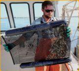 バージンのHDPEのカキの成長する袋50X100cm