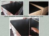 La película negra hizo frente a la madera contrachapada para el fabricante Shuttering de China de la madera contrachapada del encofrado concreto