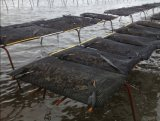 Agricoltura i sacchetti e delle gabbie dell'ostrica di acquicoltura