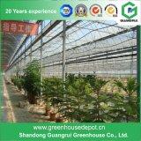 Serre chaude en verre en aluminium de flotteur de qualité pour culture de légumes