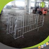 Stalle en acier galvanisée de gestation de porc d'usine de bonne qualité