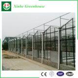 Grande estufa de vidro econômica com sistema de ventilação para a venda