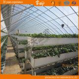盗品の庭として使用されるフィルムの太陽温室