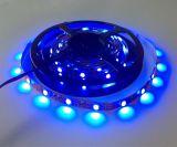 Luce blu 5050 della banda di 150-LED/5m/Roll LED