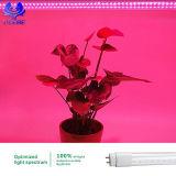l'alluminio pianta blu/rossa di T8 del PC di 7W 10W 12W 15W 18W del LED coltiva il tubo chiaro