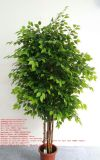 Piante e fiori artificiali dell'albero Gu-Mx-Wt-Ficus-250cm del Ficus
