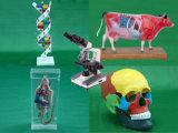 Apparecchiatura educativa - biologia