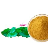 Estratto flavonoide del foglio del loto di Nuciferine per il supplemento dell'alimento