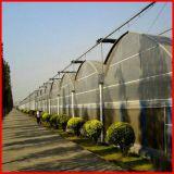 중국에 있는 판매를 위한 저가 단 하나 다중 경간 플레스틱 필름 온실