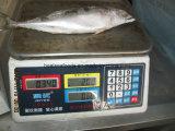 De bevroren Vreedzame Makreel van de Vissen van de Makreel (300-500g)