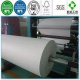 Papiercup-Rohstoffe PET überzogenes Papier