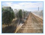 농업 온실을%s 100%년 Virgin HDPE 반대로 곤충 그늘 그물