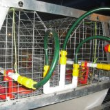 Jaula DE Pollo Kooi de Van uitstekende kwaliteit van de Kip van de Jonge kip van de Piekeraar van de Batterij