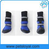 El animal doméstico medianamente grande de gama alta calza los accesorios del animal doméstico de los cargadores del programa inicial del perro