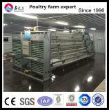 Qingdao Xinguangzheng Nueva Capa resistente a la corrosión de la jaula de pollo