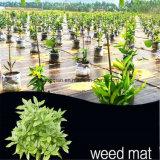 Stuoia cinese del Weed del coperchio del giardino con il prezzo di fabbrica