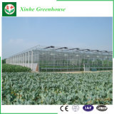 Invernadero de cristal agrícola del precio del palmo barato de Muti