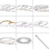 LED décoratif RVB LED Light LED Strip 12 Volt, SMD 3528 LED à courant constant avec Ce RoHS