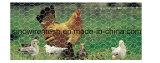 Kippegaas van China van Sailin het Hete Ondergedompelde Voor het Opleveren van het Gevogelte