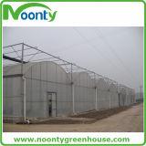 플레스틱 필름 덮음으로 증가하는 토마토를 위한 직류 전기를 통한 강철 농업 녹색 집